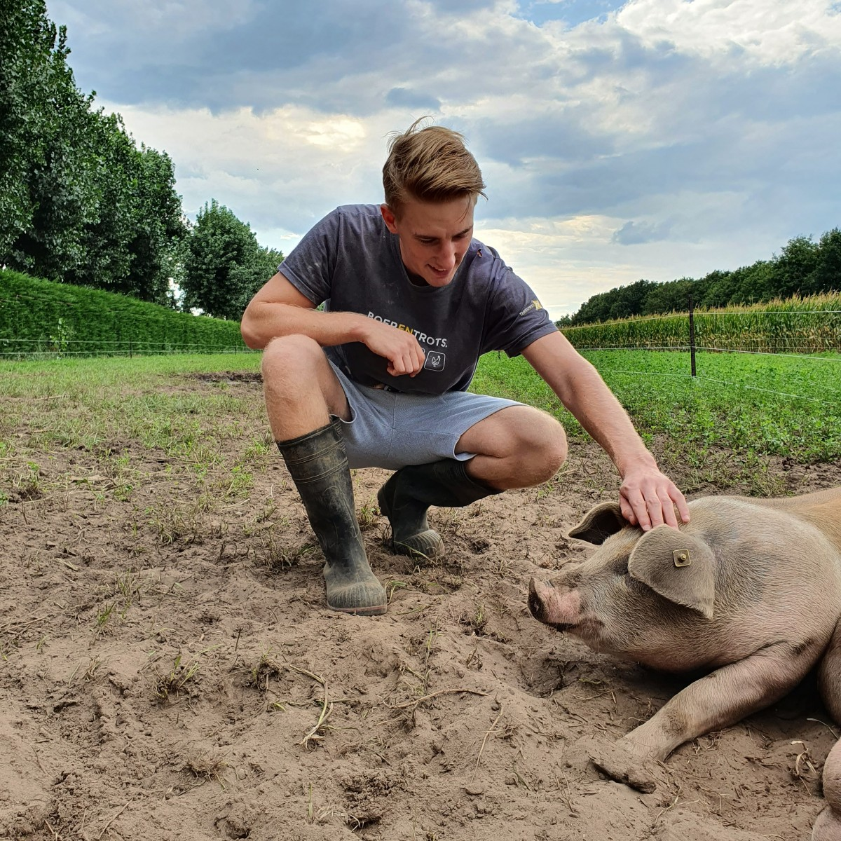 Cas den boer van 't Krulstaartje aait de varkens in de wei